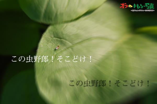 f0110680_1658297.jpg