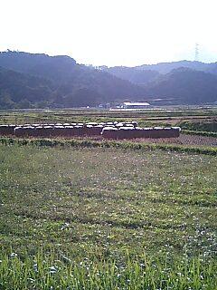 今日の川内村_d0027486_18455770.jpg