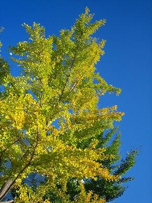 空が綺麗なので・・_b0100229_14462197.jpg