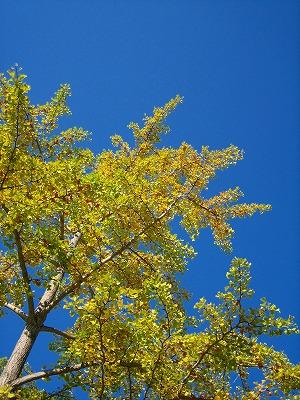 空が綺麗なので・・_b0100229_14465878.jpg