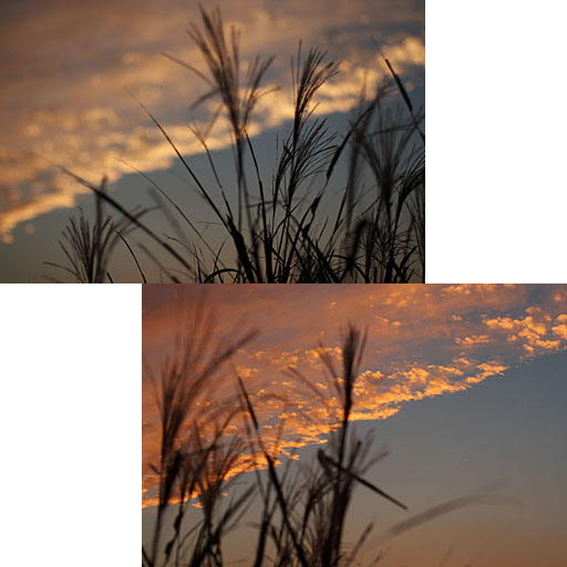 等々力_c0081286_17324660.jpg