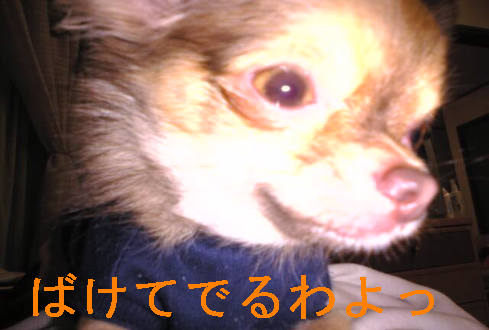 f0123589_19343225.jpg