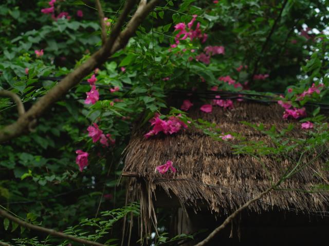 タイの風景 ライレイ・ビーチの花・花・花  _f0024992_918318.jpg