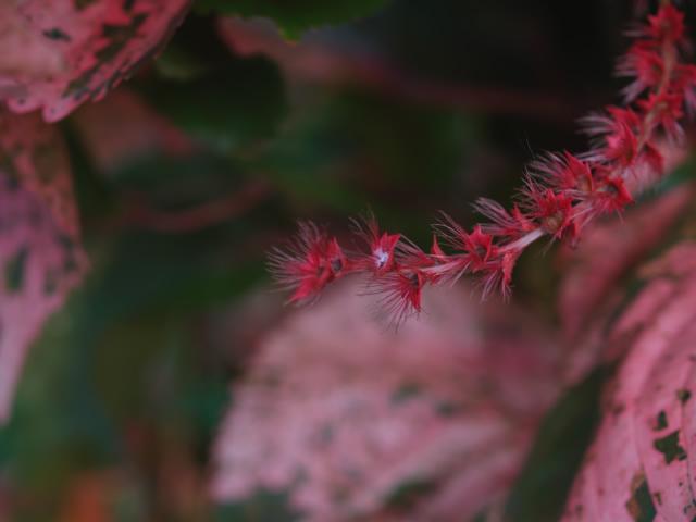 タイの風景 ライレイ・ビーチの花・花・花  _f0024992_92084.jpg