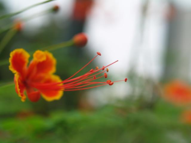 タイの風景 ライレイ・ビーチの花・花・花  _f0024992_9513640.jpg
