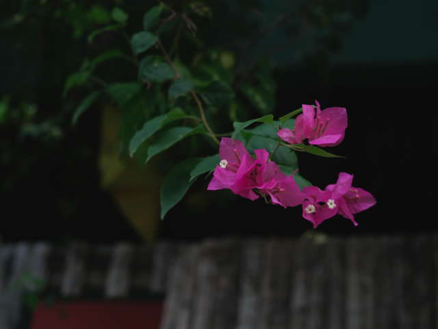 タイの風景 ライレイ・ビーチの花・花・花  _f0024992_955128.jpg