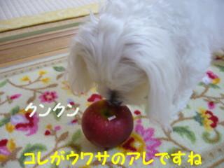 f0145192_13455843.jpg