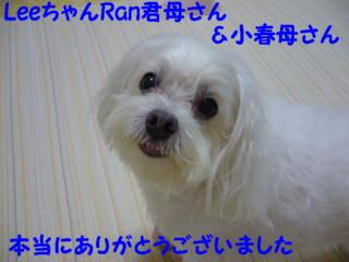 f0145192_1347419.jpg
