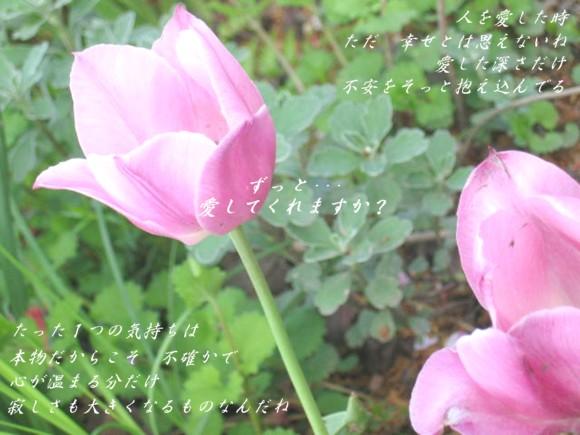 f0156895_252919.jpg