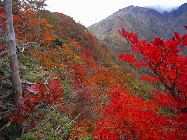 谷川岳の紅葉、写真第4報最終回_f0138096_816923.jpg