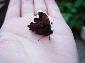 晩秋の蝶たち_e0097534_9371011.jpg