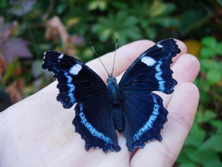 晩秋の蝶たち_e0097534_9382271.jpg