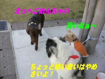 d0013645_1525124.jpg
