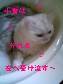 f0111467_1358157.jpg