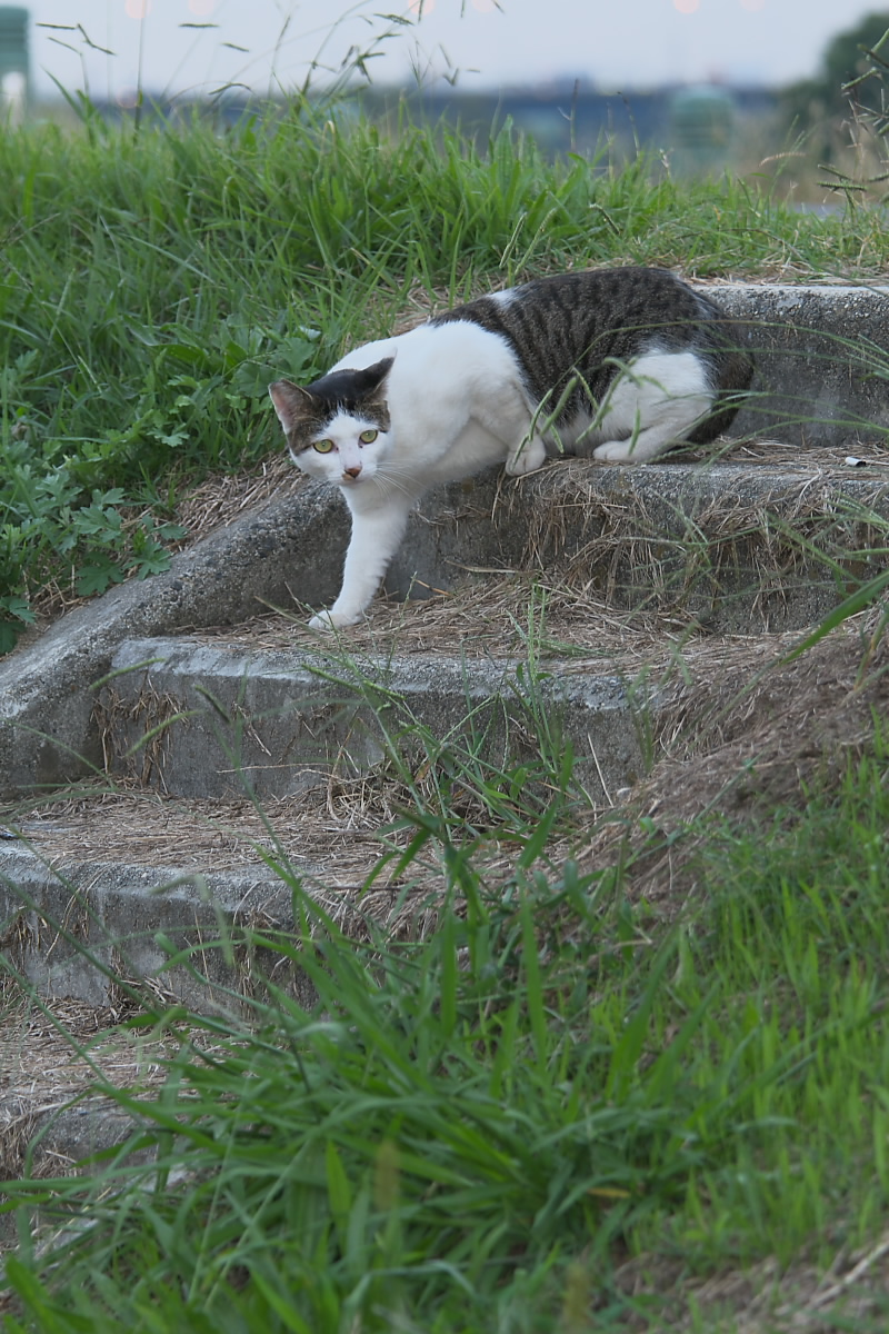 またまた猫_f0021869_18184125.jpg
