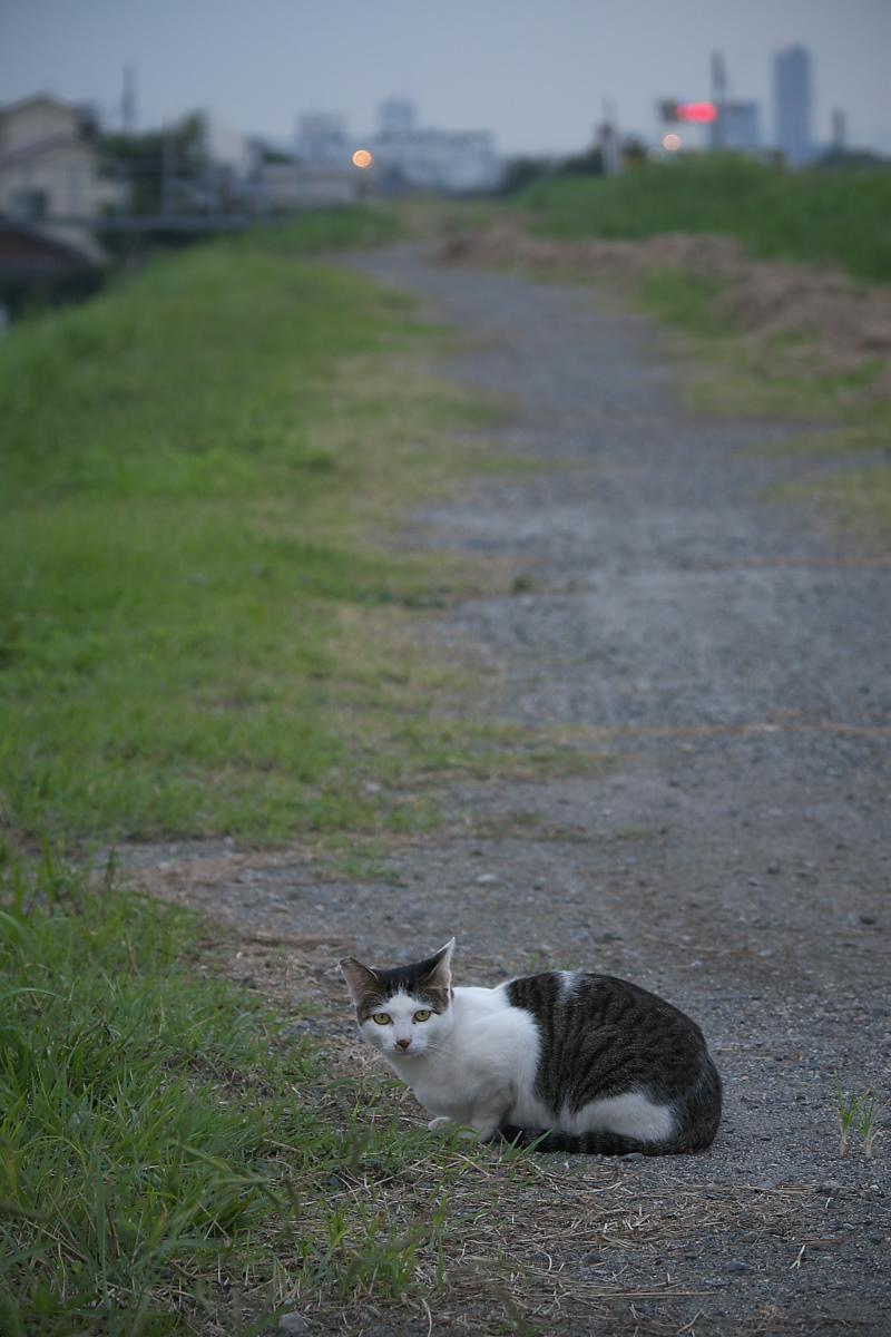 またまた猫_f0021869_18195449.jpg