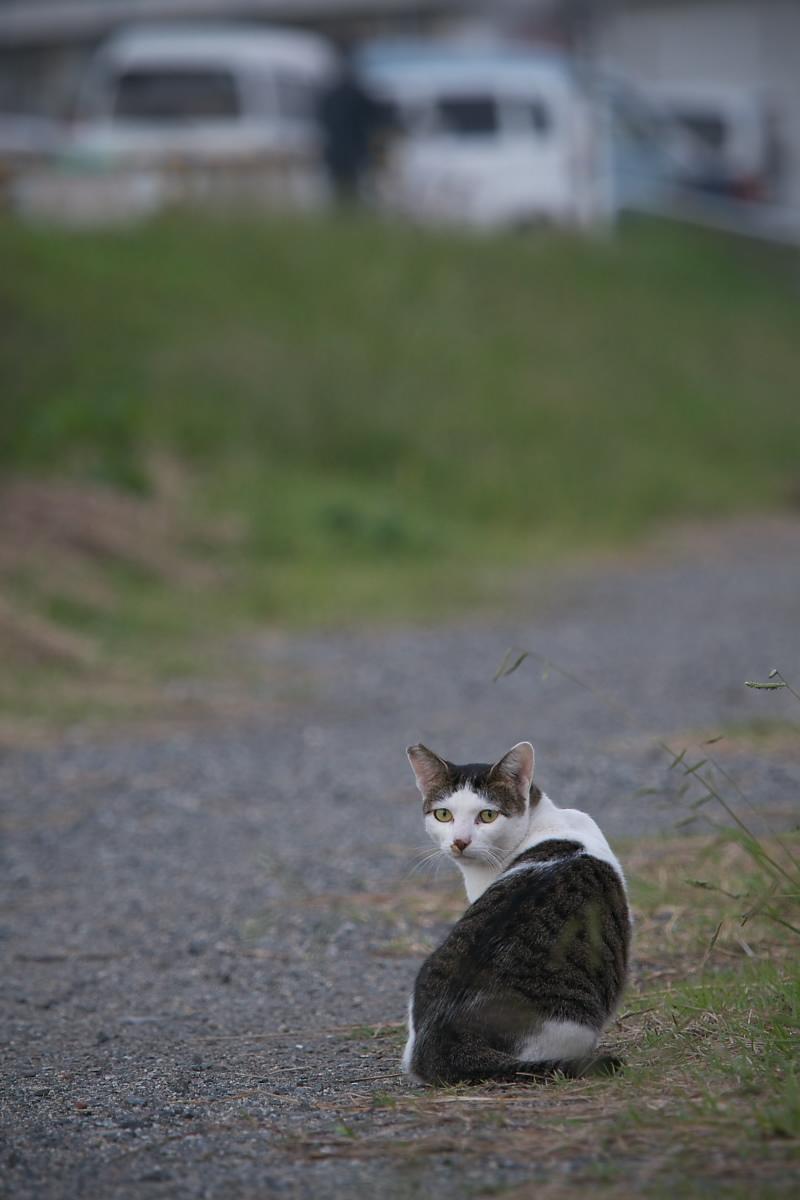 またまた猫_f0021869_18202224.jpg