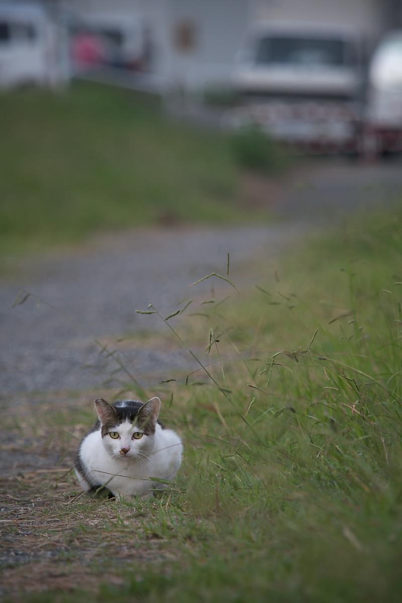 またまた猫_f0021869_18203460.jpg