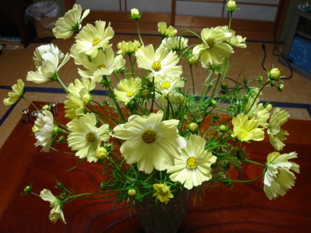 花を積んで、彼女はやって来た_a0025572_071536.jpg