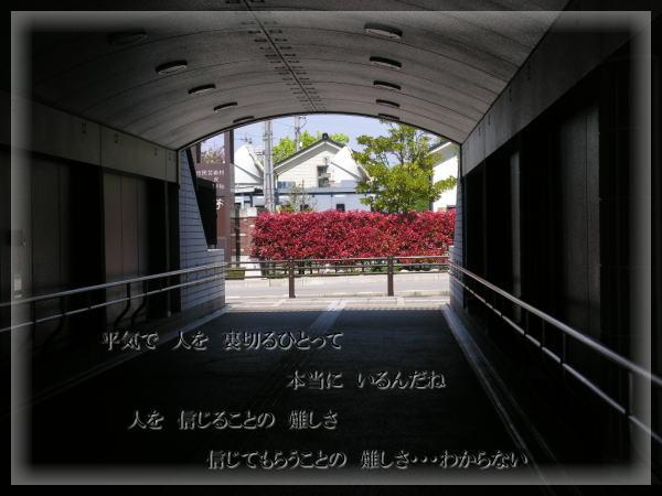 e0118974_120338.jpg