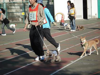 犬の運動会♪_d0087483_1913176.jpg