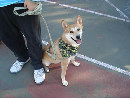 犬の運動会♪_d0087483_22522432.jpg