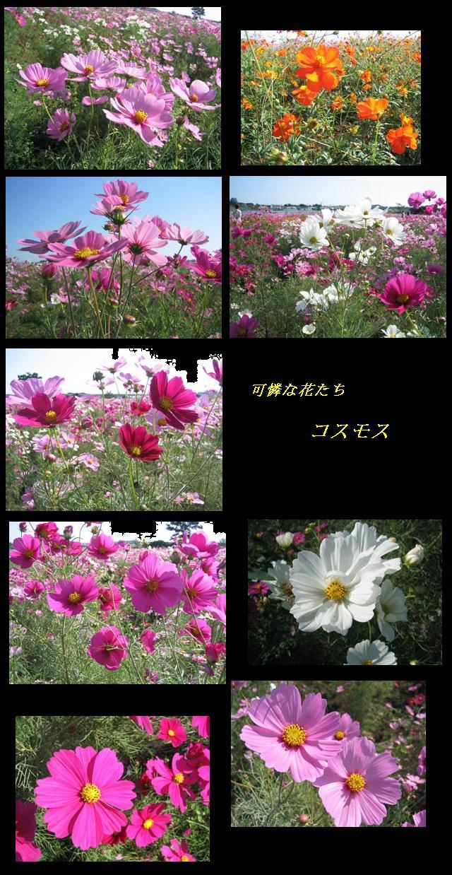 f0110488_2210297.jpg