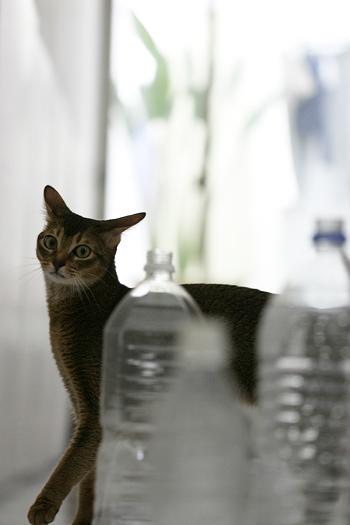 [猫的]無法地帯_e0090124_82449100.jpg