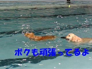 a0105425_1015157.jpg