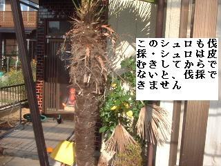f0031037_20102331.jpg