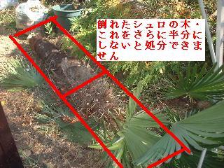 f0031037_20103752.jpg