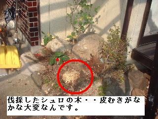f0031037_20105079.jpg