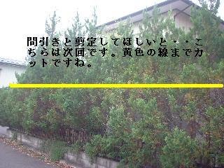 f0031037_2013290.jpg