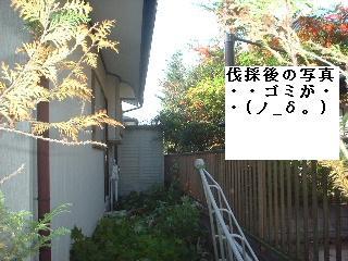 f0031037_207578.jpg
