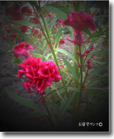 f0111147_10252155.jpg