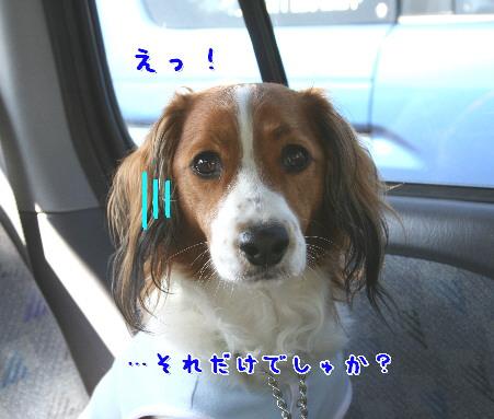 d0013149_1232411.jpg
