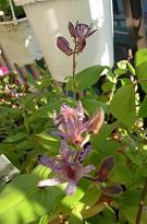 秋の花_f0139963_64204.jpg