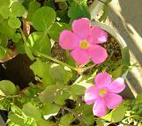 秋の花_f0139963_6551138.jpg