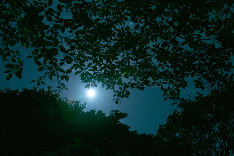 森のひかり_a0062300_1456378.jpg