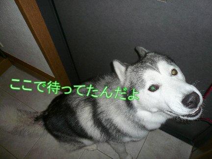 f0112407_13374613.jpg