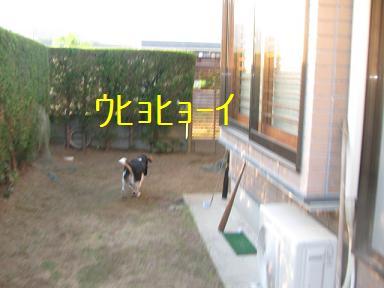 d0104209_20254944.jpg