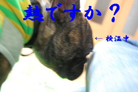 c0130324_04483.jpg
