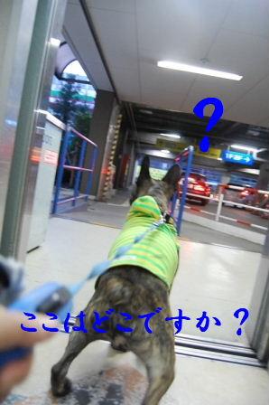 c0130324_2352343.jpg