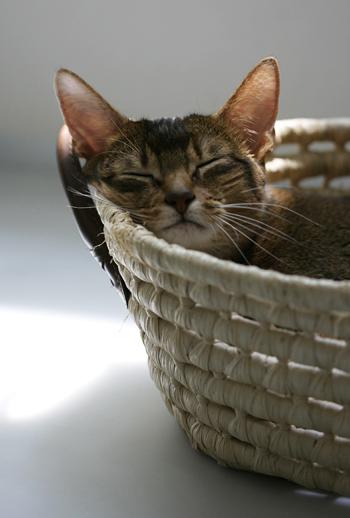 [猫的]やっぱり捨てられない_e0090124_7584424.jpg