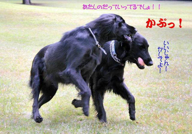 f0066824_14182641.jpg