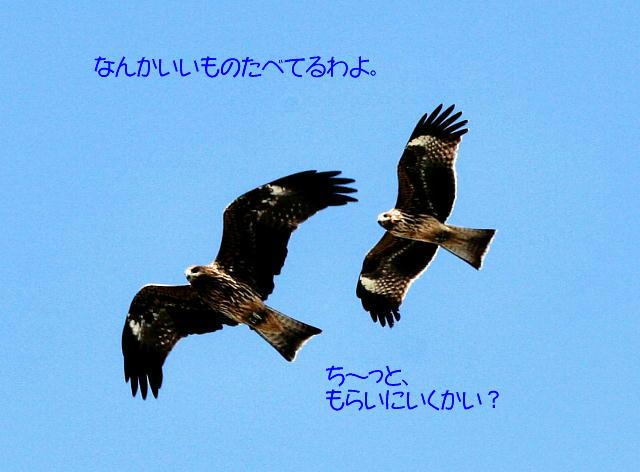 f0066824_1421767.jpg