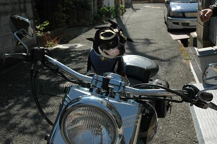 MOTORCYCLE DOG Randy_d0003977_1731627.jpg
