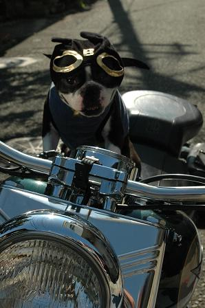 MOTORCYCLE DOG Randy_d0003977_1732660.jpg