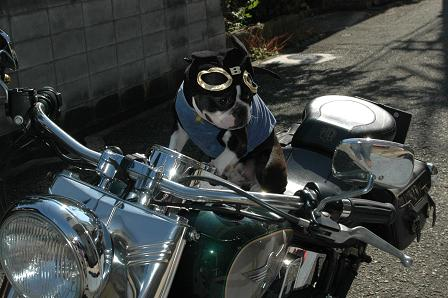 MOTORCYCLE DOG Randy_d0003977_17371453.jpg