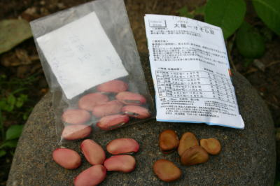 + 豆を蒔いたよvv_d0113801_15174185.jpg